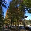 四高記念公園 紅葉情報