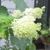 夏の花咲く土曜日の朝の庭