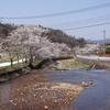 満開になった桜と農作業