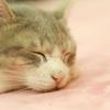 3月18日は「春の睡眠の日」。良い夢をみる方法をご紹介します。