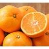 季節の果物*みかん*