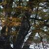 剱山へ紅葉狩り 秋色