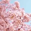 予定詳細:4/1(木)|大阪城と桜之宮公園をテクテクお花見、もりのみやキューズモールでゆっくりと