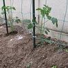 野菜の苗植え!