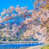 京都「嵐山・嵯峨野」有料施設、無料施設 料金一覧