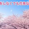 宴会をしなくても花見なの? (Even if you do not have a party, are you a cherry blossom viewing person?)