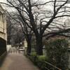 雨が降って、3月にしては寒かった