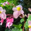 神奈川県日向薬師周辺を散策!彼岸花と綺麗な花々に癒されて