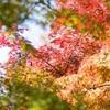笠置寺もみじ公園の紅葉2019、見頃や現在の状況。
