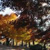 フリーランスの育児日記009:昭和記念公園