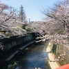 平日に桜を見てピザを喰らう