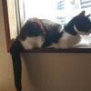 今日の黒猫モモ&白黒猫ナナの動画ー996