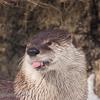 Morioka Zoo - Otterly Snowy Day