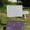 万葉歌碑を訪ねて(その1178)―奈良市春日野町 春日大社神苑萬葉植物園(138)―万葉集 巻十 二一一五