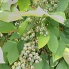 ブルーベリー栽培をずっと楽しんでいたい!