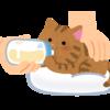 子猫にあげるご飯ってどんなの?3つのポイントとおすすめフード5選