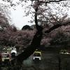 井の頭公園で花見をする際のポイントを整理してみた