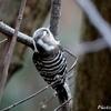 日本 2月29日に自宅庭に来た野鳥たち