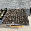 キャベツ、カボチャの定植と畑のメンテナンス