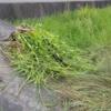 台風前に草を抜きました。今年は満足です♪