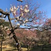 小石川植物園 4