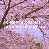 【作業用4K映像】桜の花と遠い海。【30分集中動画】