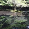 【山吹水源】日本の名水‼︎まるでジブリの世界‼︎