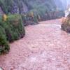 【キリストの森の崩壊】イタリア・ベネト州で数千haの森がマッチ棒の如くなぎ倒される【森喜朗 世界の森】