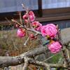 わが家の庭にも春が・・・