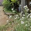 自然の中で遊ぶ〜広済寺の庭