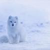 寒い地方に旅行に行くときの「冬の寒さ対策」は万全ですか〜。
