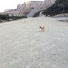 【男鹿島犬問題?】旧採石場には犬が追いかけてきた。ガチでヤバイ!