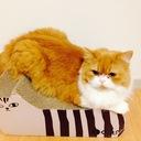 ネコ夫婦の家づくり日記