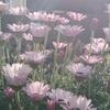 【朝活】春の庭&逆光で撮影する