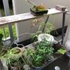 現在の盆栽棚。以前に比べ、幾らか鉢の数が減りました。