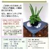 苔玉アート入門③講座のお誘い