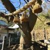 絡み合う木が良縁を約束する 本牧神社の縁結びの木(横浜市中区)