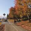 山形県山辺町で開催された第8回星ふるロードマラソンに参加してきました