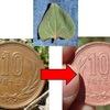 いろいろな葉っぱで10円玉をピカピカにしてみよう!【勝手に自由研究】