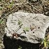 小さな種と豆の木