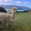 車なしニュージーランド縦断トリップ完全攻略【交通・宿・費用編】