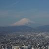 陽だまりハイキング、しつこく弘法山界隈