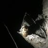 閲覧注意!深夜の昆虫採集で見たいろいろな生物のドラマ