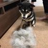 【初めての犬グッズ】ファーミネーターはやめました。