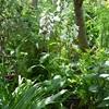 今朝の庭から ・・・ジギタリス、カンパヌラ サラストロ