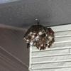 浜松市で軒下にできたハチの巣を駆除してきました