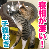 すさまじい体勢で爆睡する子猫!体が半分が宙に浮いてる!笑