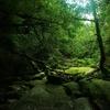 【屋久島旅行】その6:縄文杉よりいいかもしれない白谷雲水峡【もののけ姫の森】