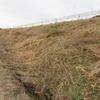 堤防の草刈り
