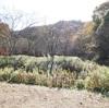 友達とはじめてのデイキャンプ:姫路牧野キャンプ場